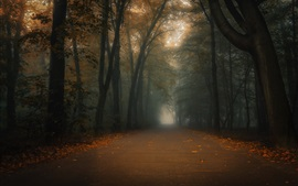 Preview wallpaper Forest, trees, road, fog