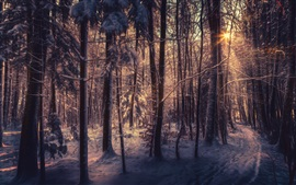 Preview wallpaper Forest, trees, snow, sunlight, winter