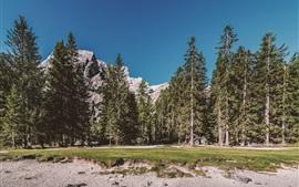 Bosque, árboles, piedras, montañas