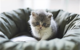 Preview wallpaper Furry kitten, rest, chair