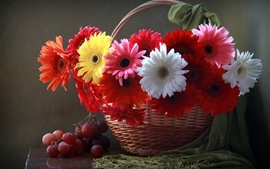 Gerbera flowers, basket, grapes
