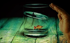 Preview wallpaper Glass cup, fish, boat, fishing, fisher, creative