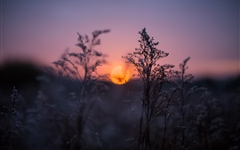 壁紙のプレビュー 日没、夕暮れ、ぼやけている草