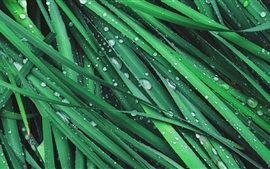 Трава, зеленые листья, роса, капли воды