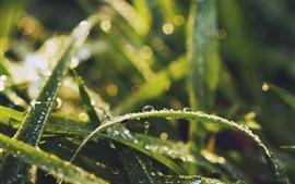 Травяные листья, капли воды, роса, насекомые