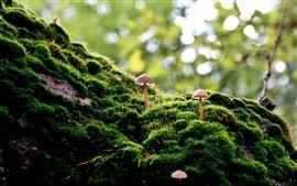 Vorschau des Hintergrundbilder Gras, Pilz, Natur