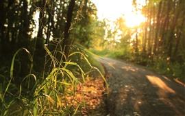 Grama, luz solar, estrada, árvores, manhã