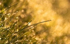 Трава, солнце, роса, блики