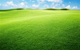 Grassland, green, sky