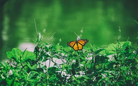 Preview wallpaper Green grass, butterfly
