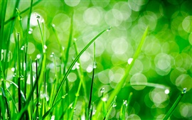 Preview wallpaper Green grass, dew, water drops