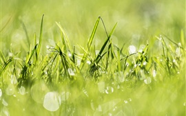 Preview wallpaper Green grass, light circles, summer