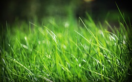 Preview wallpaper Green grass, summer