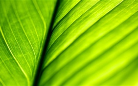 Preview wallpaper Green leaf macro photography, backlight