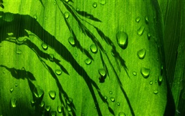 Green leaf, water drops, light