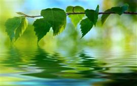 Folhas verdes, galhos, água, reflexão