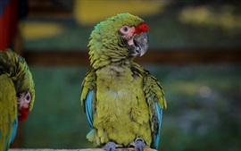 Preview wallpaper Green parrot, bird close-up