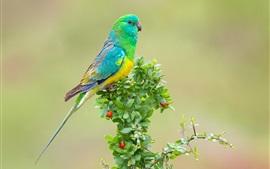 Green parrot, leaves, berries