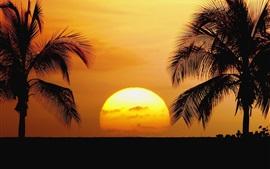 Hawaii, plage, lever de soleil, palmiers