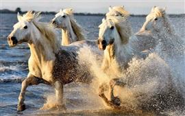 Cavalos correndo na água, respingo