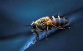 Preview wallpaper Insect, bee, macro photography