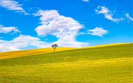 Preview wallpaper Italy, Apulia, hills, fields, tree, blue sky, clouds
