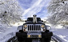 Джип, собака, зима, снег, деревья