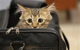 Preview wallpaper Kitten in bag, look, face, eyes