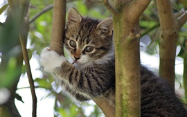 Kitty in tree