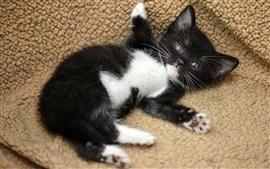 Прекрасный черный котенок, голубые глаза