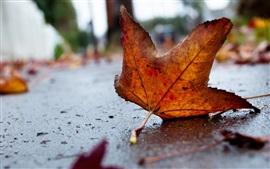 Maple leaf on ground, autumn