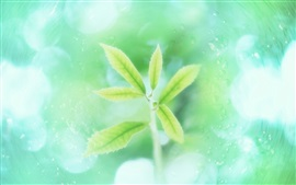 Preview wallpaper Mint green leaves, bokeh