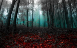 Утро, лес, деревья, туман