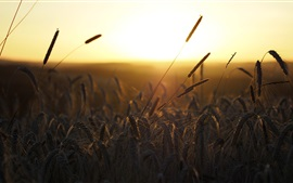 Manhã, grama, nascer do sol