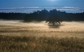 Manhã, grama, árvores, névoa