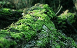 Preview wallpaper Moss close-up, forest