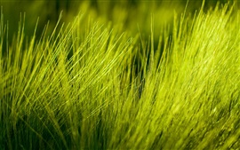 Preview wallpaper Nature, green grass close-up