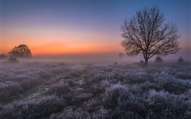 Нидерланды утро, деревья, трава, туман, небо