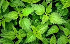 Красные листья, зеленые, растения