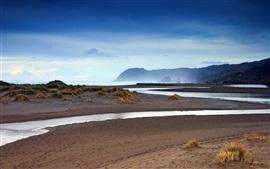 Nova Zelândia, praia, grama, mar, amanhecer
