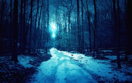 Preview wallpaper Night, forest, trees, light, path, snow