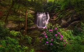Caroline du Nord, nature, cascade, rhododendrons, arbres