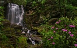 Preview wallpaper North Carolina, waterfall, rhododendrons, rocks
