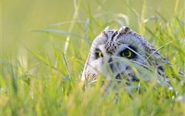 Сова спрятана в траве, посмотри