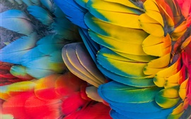 Preview wallpaper Parrot colorful feathers close-up