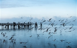 Preview wallpaper Pier, gulls, flying, water