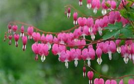 미리보기 배경 화면 핑크 색상의 마음이 꽃을 분홍색