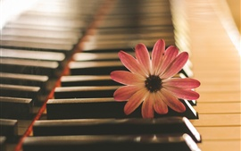 Preview wallpaper Pink flower, piano, music theme