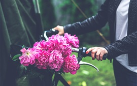 Preview wallpaper Pink peonies flowers, bicycle
