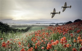 Planes, poppies field, mountains, fog